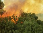 Travel Agent News from Squaremouth for Travel Insurance during California Fires