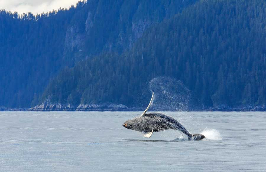 Travel-Agent-news-for-Lindblad-Whale-Exploration-Travel