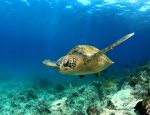 Travel Agency News for SEE Turtles