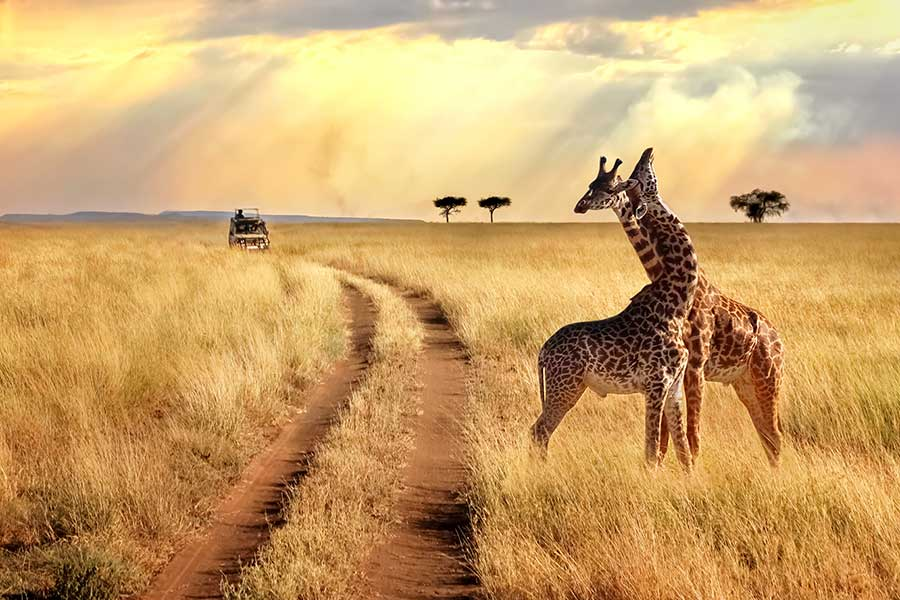 African Travel, Inc. Voted Top Safari Outfitter by Travel + Leisure
