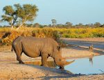 African Travel, Inc. Donates Funds to Help Support Rhino Conservation at Shamwari Game Reserve