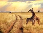 African Travel, Inc.'s 2020 Brochure Discovers the Magic of Africa While Making Travel Matter