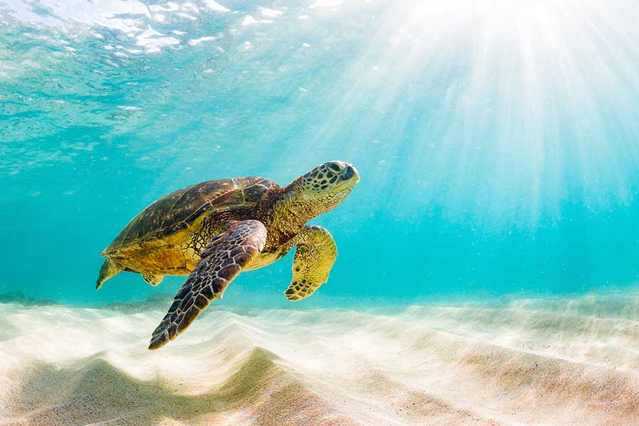 Turtley Awesome, Help Save SeaTurtles with Grupo Xcaret's #Tortugaton Initiative