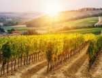 Exclusive Air Offers: Take An Immersive Journey to Europe and Beyond With Luxury Gold