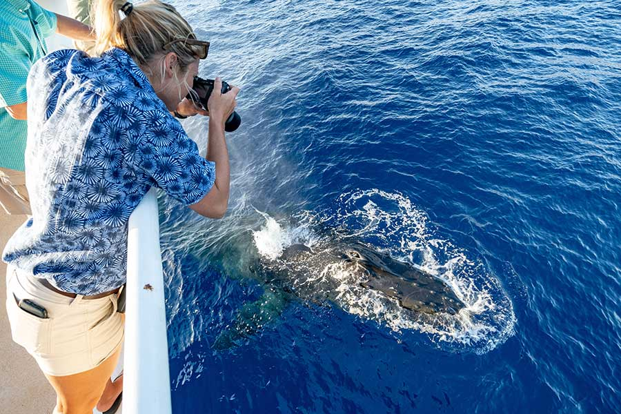 Five Reasons to go Whale Watching in Riviera Nayarit
