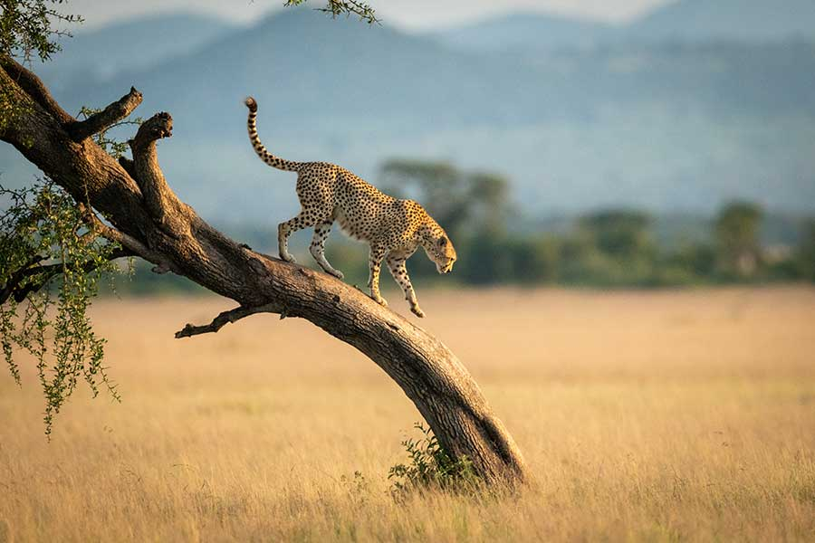 Travelers can Save Now on New, Five-Star Safaris with Limited Time Offers from African Travel, Inc.