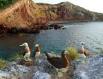 Riviera Nayarit Announces Birds and Health Program to Combat Anxiety and Stress Through Birdwatching